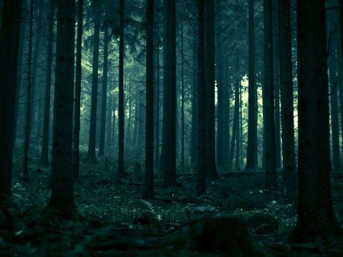 In The Pines, l'histoire d'un morceaucentenaire